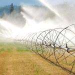 Garanții de până la 80% de la stat pentru fermierii care accesează fonduri europene