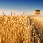 Romalimenta vrea dezvoltarea susținută a industriei alimentare