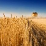 150 milioane de euro pentru modernizarea exploataţiilor agricole