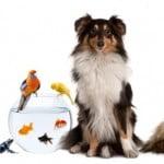 PetExpo 2014 a fost vizitat de 12.500 de iubitori de animale