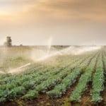 Subvențiile APIA pentru fermieri, prefinanţate de Credit Agricole Bank
