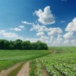 Procedura de acordare a fondurilor europene pentru agricultori, simplificată