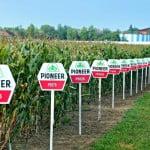 DuPont Pioneer: performanță și calitate în agricultură