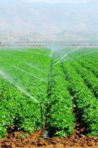 Utilizarea pesticidelor in agricultura