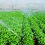 Fermierii pot depune cererile unice pentru plată până pe 10 iulie