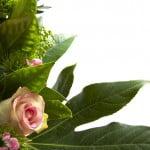 Ce cadouri oferă românii de 1 și 8 martie?