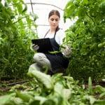 Consumul de legume și fructe românești, stimulat prin programe speciale