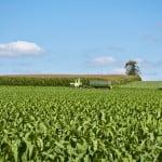 România, pe primul loc în Europa la suprafaţa cultivată cu porumb