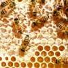 Mierea din România îndulcește masa străinilor