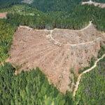 Reglementări mai stricte pentru exporturile de material lemnos
