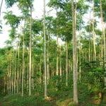 Cooperare româno-cehă în domeniul silviculturii