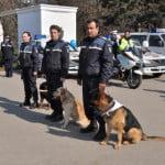 4 tone de peşte, confiscate de Poliţia Română