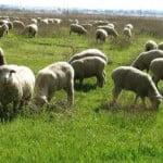 Cum a evoluat producţia de carne a României, în 2014?