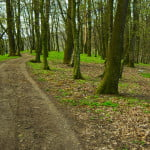 Fonduri de 50 de milioane de euro pentru împădurire
