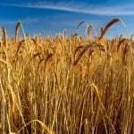 Anunţ important pentru fermieri