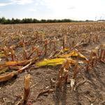640 milioane lei, ajutor de stat pentru fermierii afectaţi de secetă