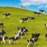 FNGCIMM garantează creditele pentru pentru ajutoarele naţionale în sectorul zootehnic
