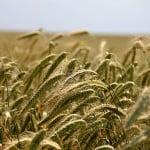 Monsanto: Schimbările climatice, una dintre cele mai mari probleme pentru agricultură