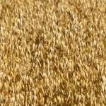 PE: Produsele agricole ameliorate trebuie excluse de la patentare