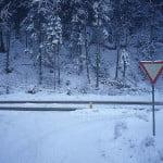 Cod galben de ninsori în Bulgaria