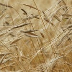 TotalSoft extinde pachetul de programe destinat agriculturii