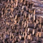 Percheziţii la persoane bănuite că au furat lemne dintr-o pădure privată din Iaşi