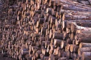 Pret lemn de foc 2019