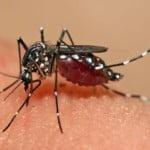 Al doilea caz de infectare cu virusul Zika a fost confirmat în România