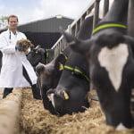 Parlamentul European vrea să interzică administrarea unor antibiotice la animale