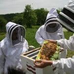 Peste 30 de milioane de lei, ajutor de stat pentru apicultori