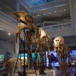 Peste 170 de muzee şi instituţii culturale participă la Noaptea Muzeelor 2016