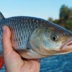 Consumul global de pește pe cap de locuitor a depăşit 20 de kilograme anual