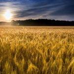 Fonduri tineri fermieri 2019. Subvenții pentru cei care fac angajări