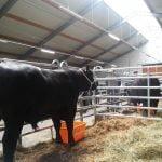 ANGUS Partners Day, cel mai important eveniment al crescătorilor de bovine Angus