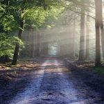 Fonduri europene împădurire 2019. Când se depun cererile?