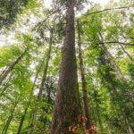 Carrefour și WWF România protejează 21.000 ha de păduri
