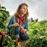 Hornbach: Vânzările de bulbi de flori, în creştere