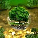 Avantajele investițiilor în plante energetice