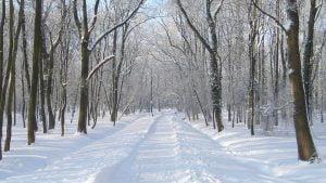 Iarna 2020-2021.