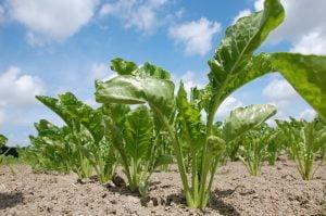 Reglementari fitosanitare