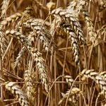 Pria Agriculture&Gala Fermierilor Români are loc astăzi