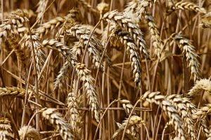 Productia agricola a Romaniei