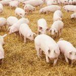 APIA, un nou anunţ important pentru crescătorii de animale
