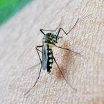 Virusul West Nile: 166 de cazuri confirmate în România
