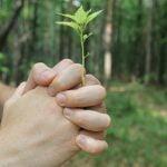 MedLife a reîmpădurit 10 hectare de teren din Munții Făgăraș