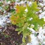 Comunitatea Greenfield a plantat 1.000 de puieți în Pădurea Băneasa