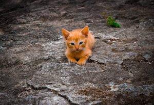 Asigurare animale de companie City Insurance - Asigurare de sanatate animale de companie