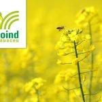Agroind Cauaceu, cel mai mare producător de semințe certificate din zona de nord-vest a României