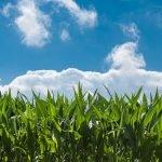 Asigurări agricole: Veste bună pentru fermieri!