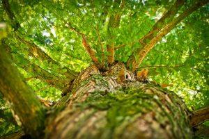 Investigatie piata lemnului Consiliul Concurentei